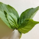 Lemon Basil leaves
